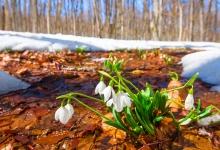 Tavaszköszöntő napok