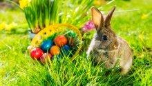 Húsvéti ajánlat Tisza Balneum Hotel